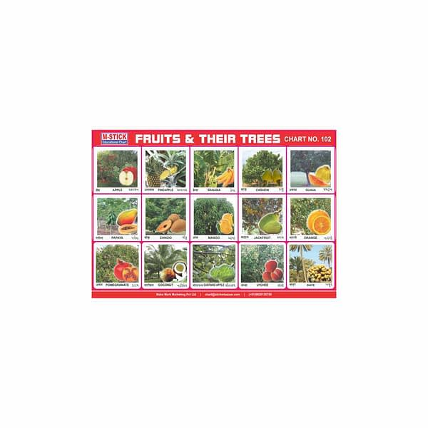 M-Stick Educational Chart 102 Fruits & Their Trees